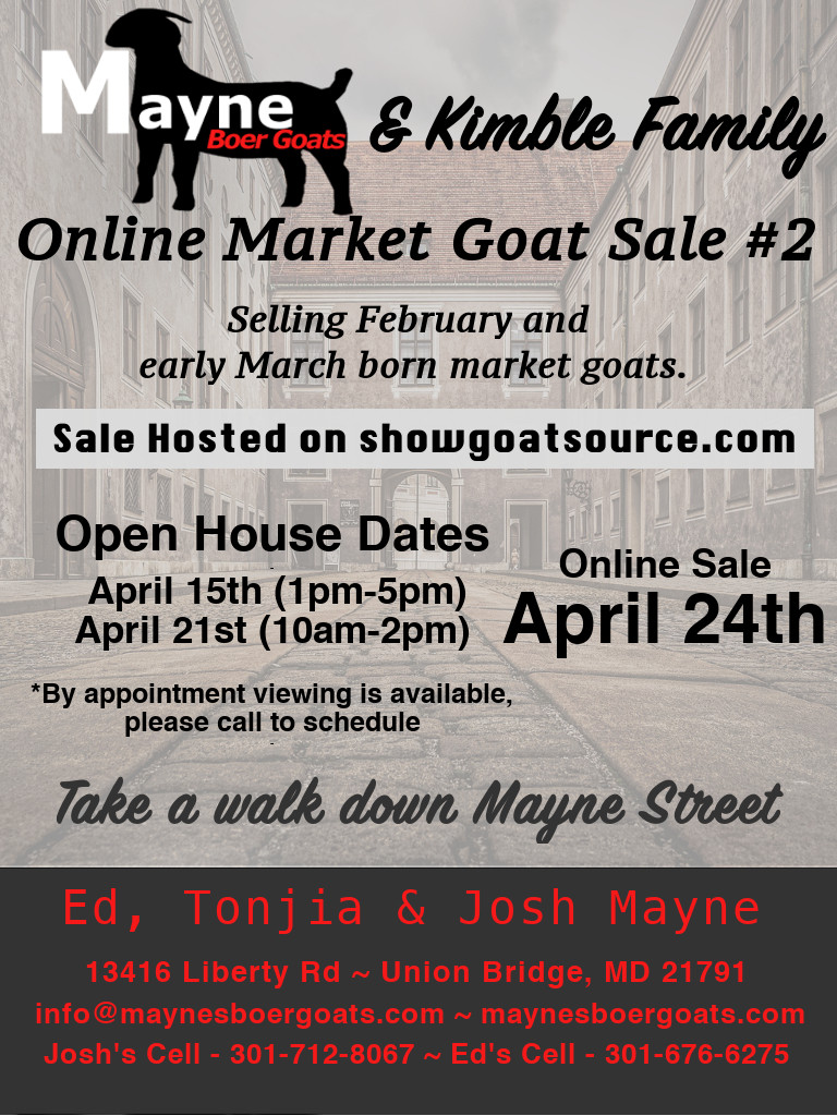 Mayne's Boer Goats - Wethers For Sale